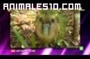 El kakapoo segunda parte