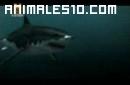 Mundo Jurásico - Megalodon P4