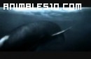 Mundo Jurásico - Megalodon P5