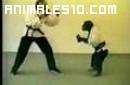 Un mono Karateka