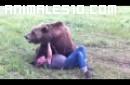 Osos grizzly jugando con su entrenador