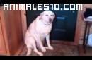 Un perro arrepentido