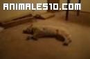 El perro que corre durmiendo