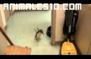 Cosquillas a un pequeño pinguino