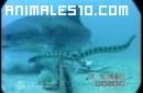 Tiburon se zampa lo que pilla