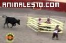 Ataques de animales y caidas divertidas